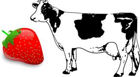 cow+strawb