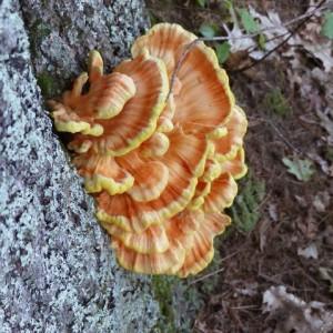 fungus2