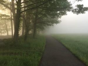 lltl-fog